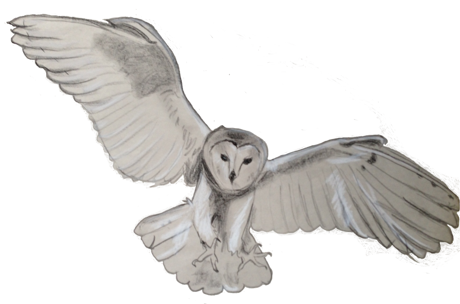 flying-barn-owl-artist-SusanPowers