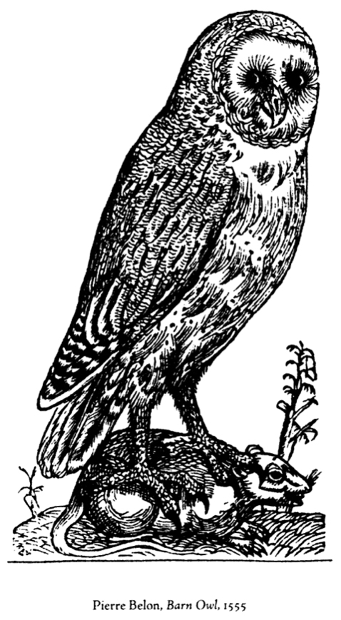 Owl Wise Leader Owl